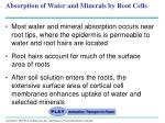 absorption of water and minerals by root cells