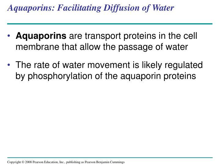 Aquaporins: Facilitating Diffusion of Water