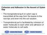 cohesion and adhesion in the ascent of xylem sap