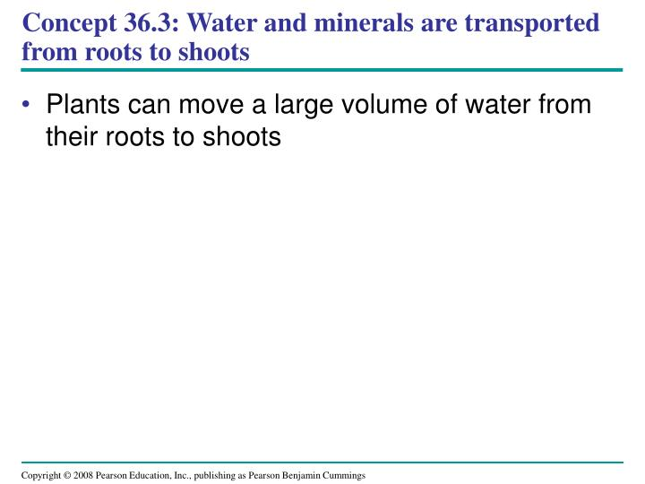 Concept 36.3: Water and minerals are transported from roots to shoots