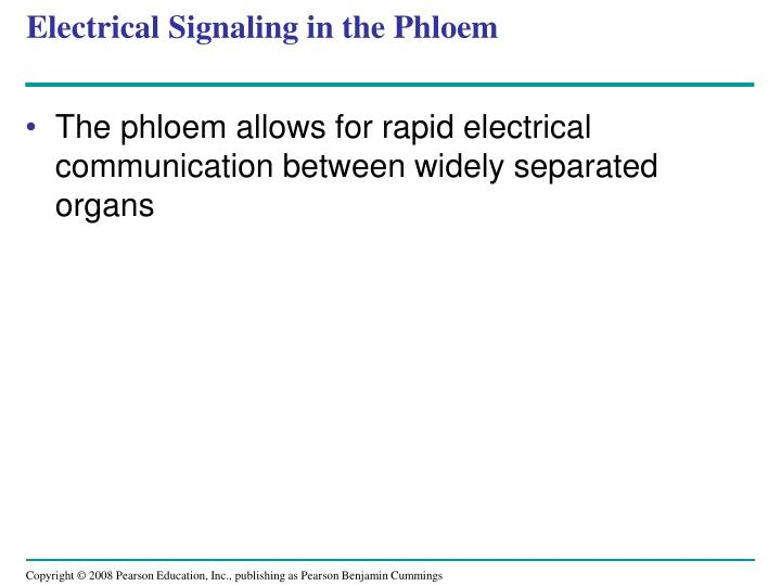 Electrical Signaling in the Phloem