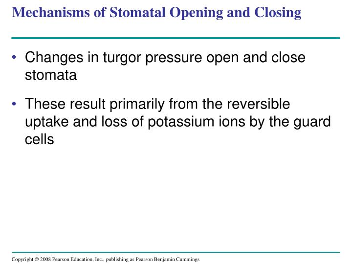 Mechanisms of Stomatal Opening and Closing