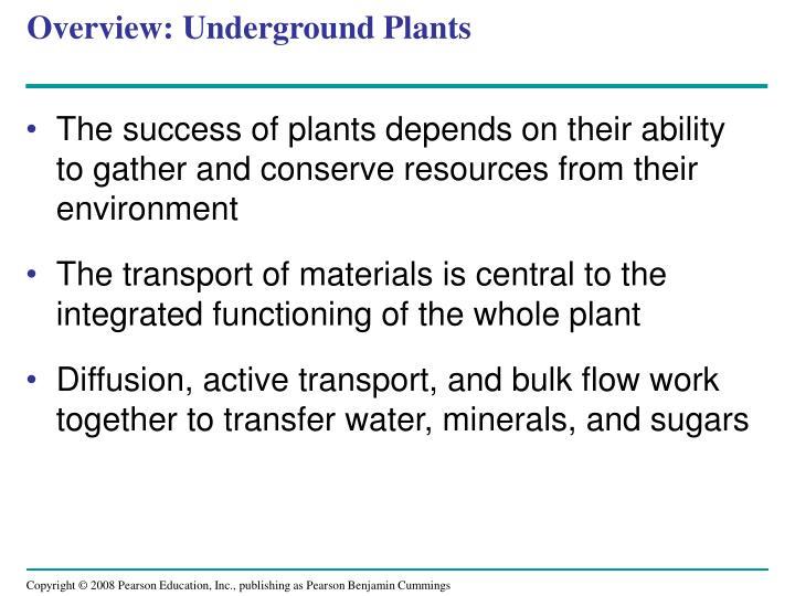 Overview: Underground Plants