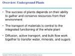 overview underground plants