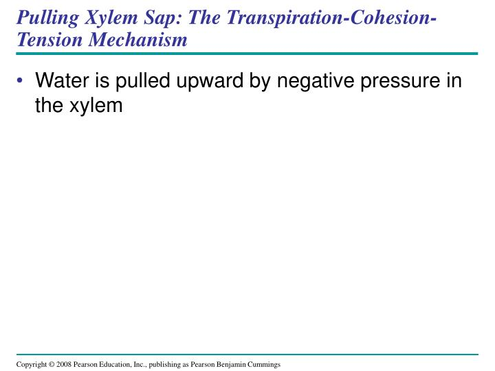 Pulling Xylem Sap: The Transpiration-Cohesion-Tension Mechanism