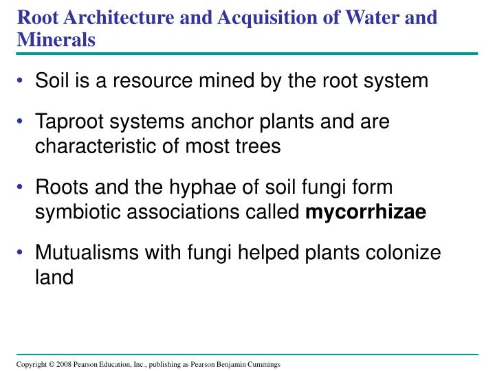 Root Architecture and Acquisition of Water and Minerals