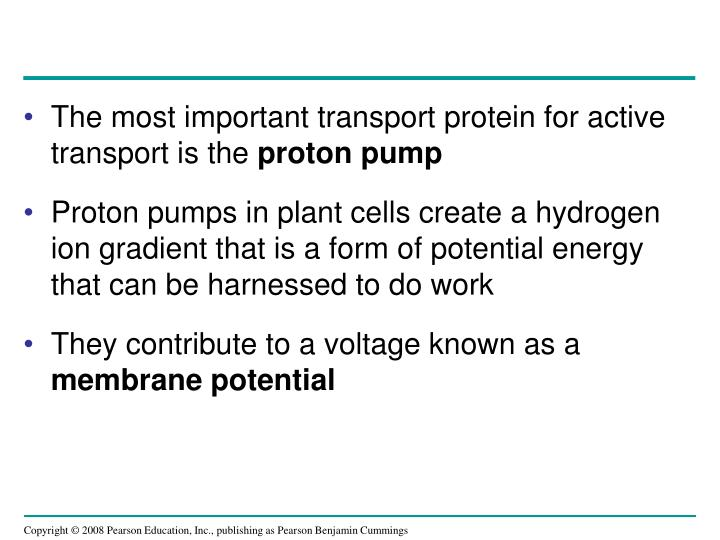 The most important transport protein for active transport is the