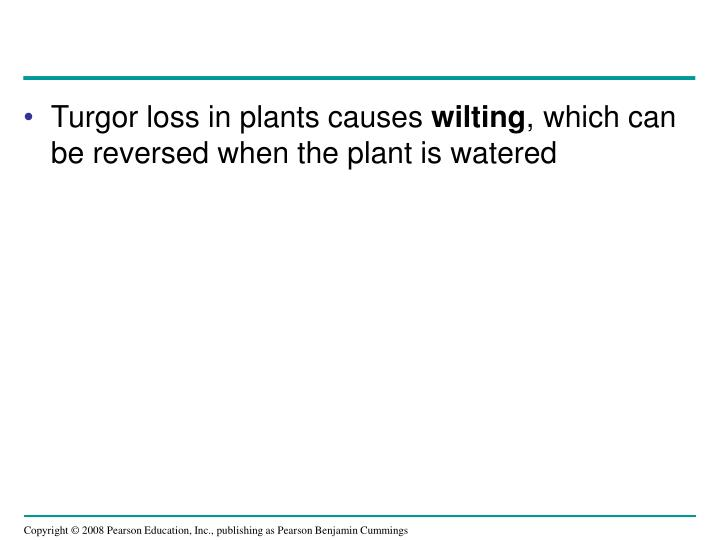 Turgor loss in plants causes