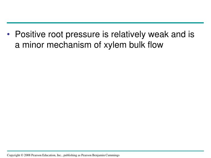 Positive root pressure is relatively weak and is a minor mechanism of xylem bulk flow