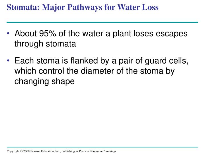Stomata: Major Pathways for Water Loss