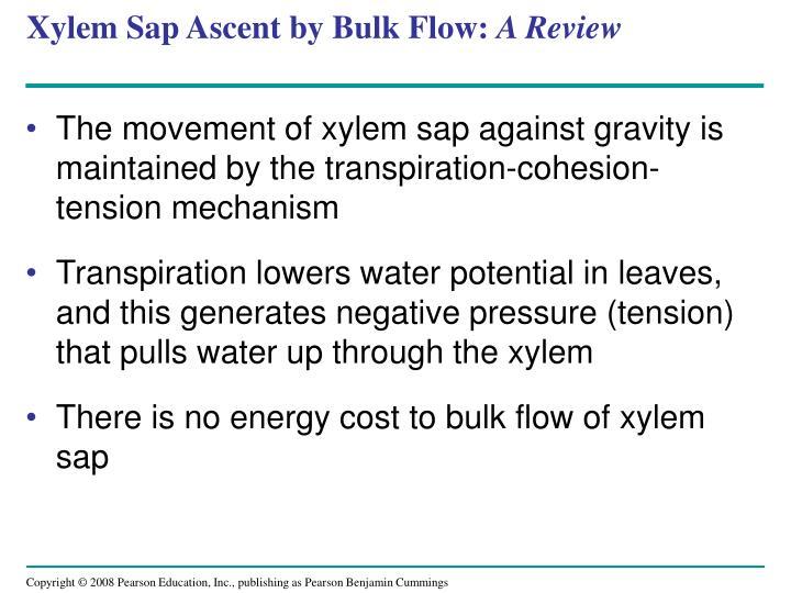 Xylem Sap Ascent by Bulk Flow: