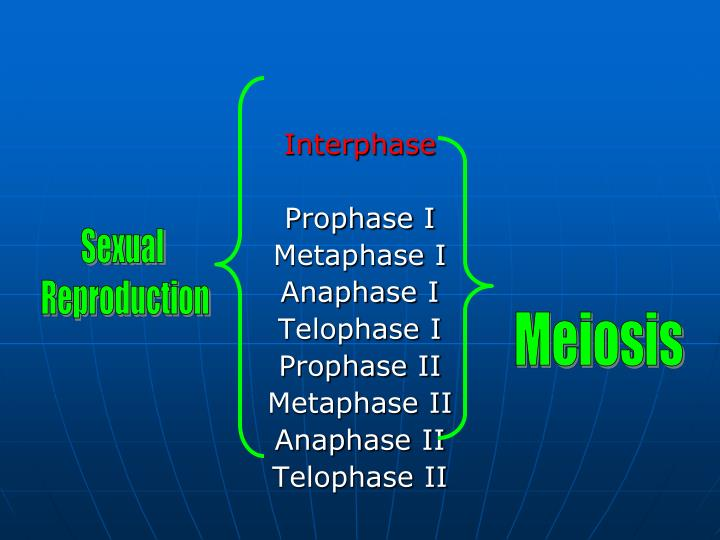 Interphase
