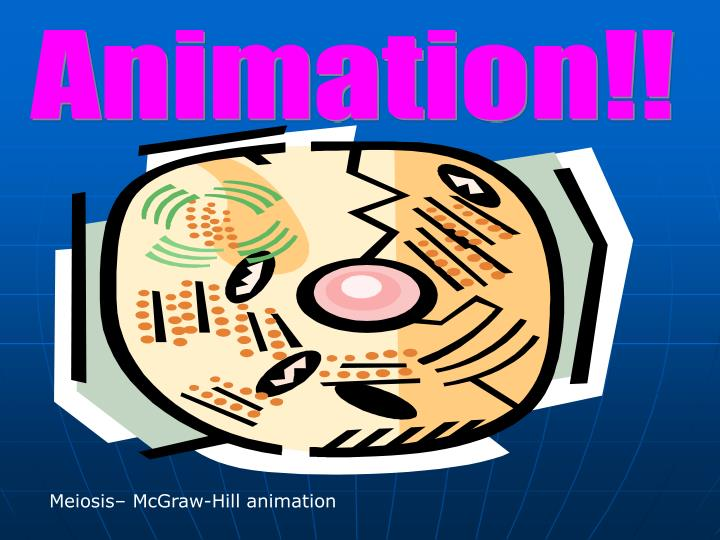 Animation!!