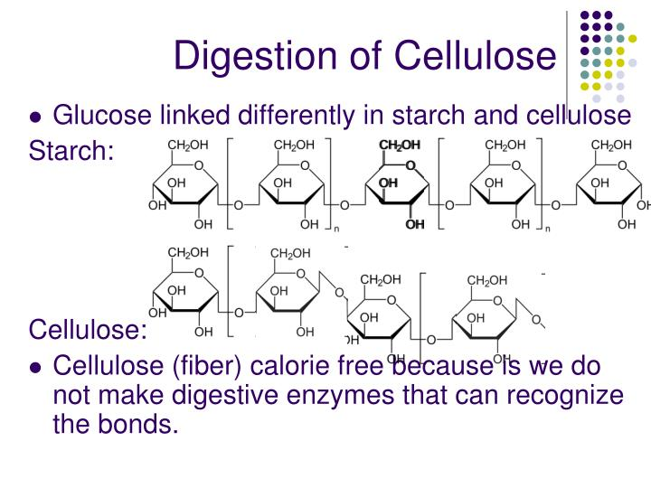 Digestion of Cellulose