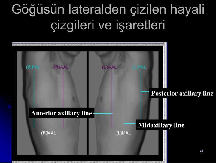 Posterior axillary line