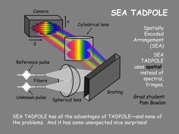 SEA TADPOLE