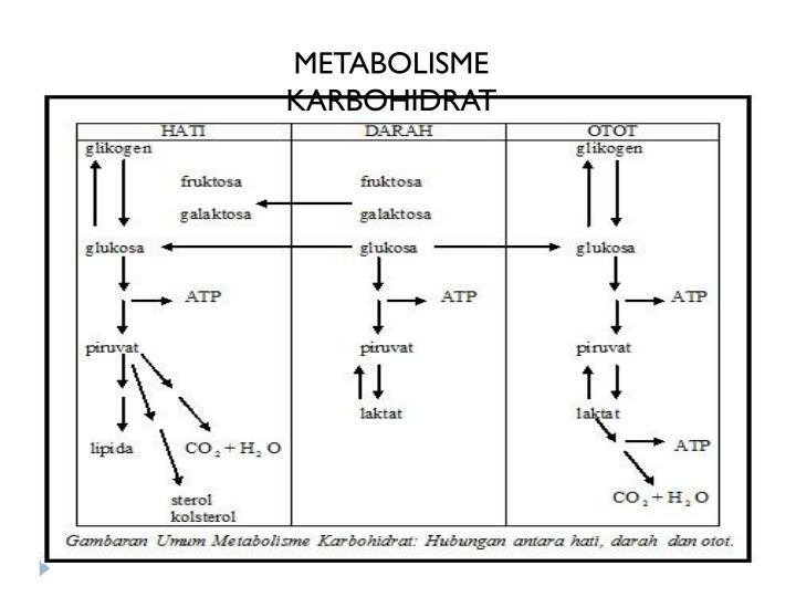 Jurnal Doc : metabolisme karbohidrat