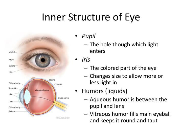Inner Structure of Eye