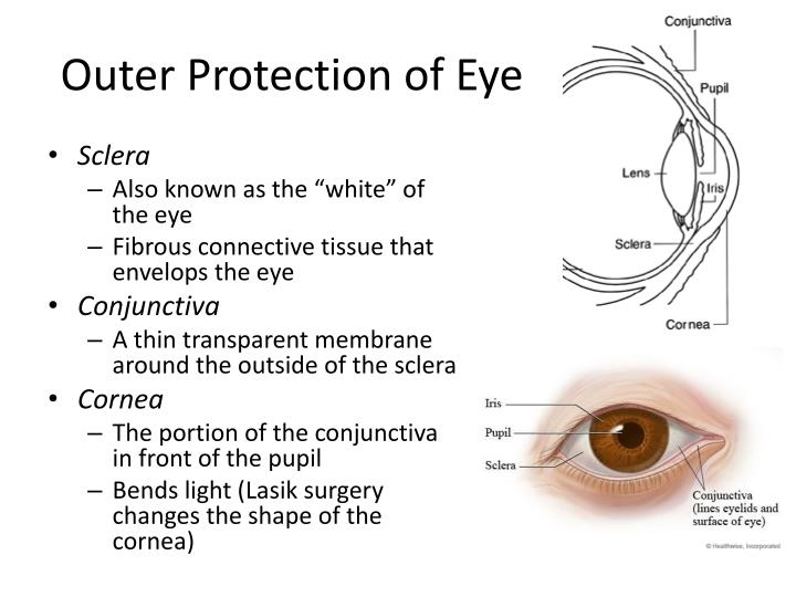 Outer Protection of Eye