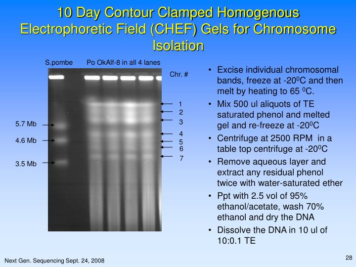 10 Day Contour Clamped Homogenous Electrophoretic Field (CHEF) Gels for Chromosome Isolation