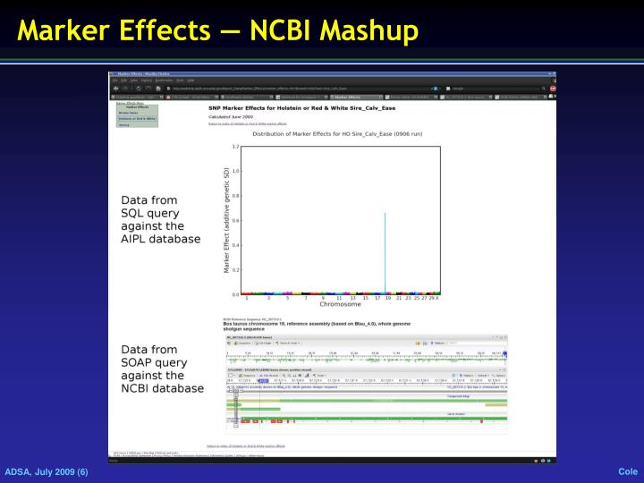 Marker Effects ― NCBI Mashup