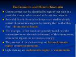 euchromatin and heterochromatin