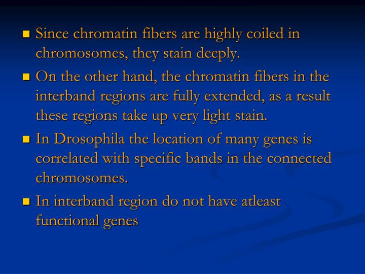 Since chromatin fibers are highly coiled in chromosomes, they stain deeply.