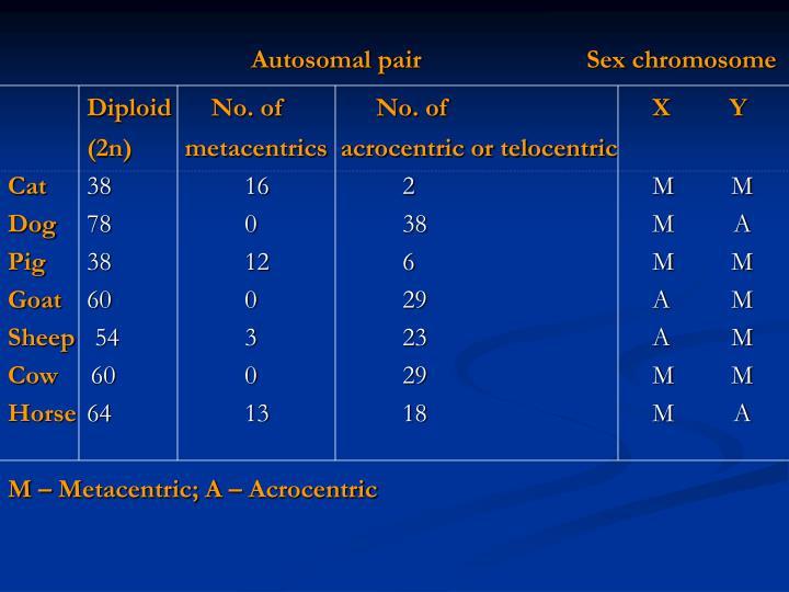 Autosomal pair    Sex chromosome
