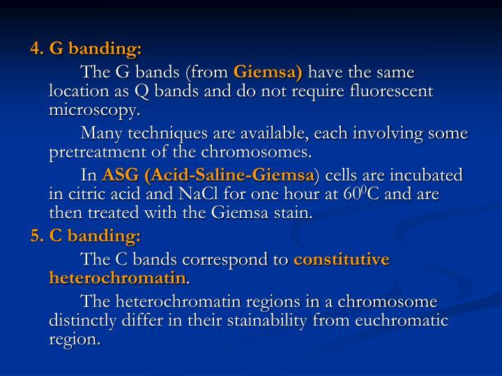 4. G banding: