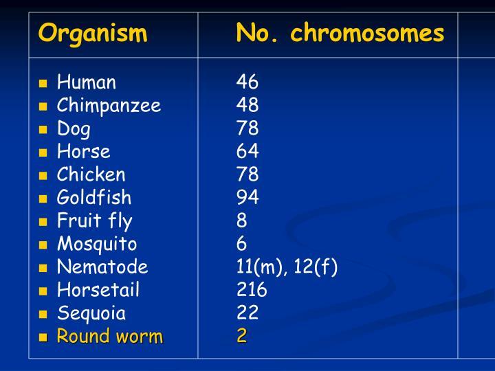 OrganismNo. chromosomes