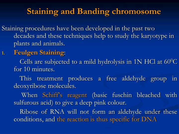 Staining and Banding chromosome