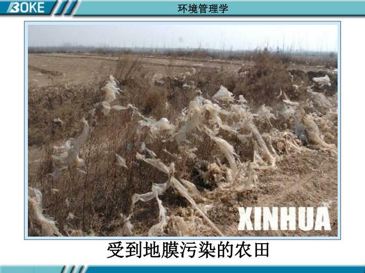 受到地膜污染的农田
