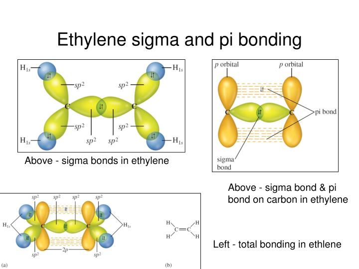 Ethylene sigma and pi bonding