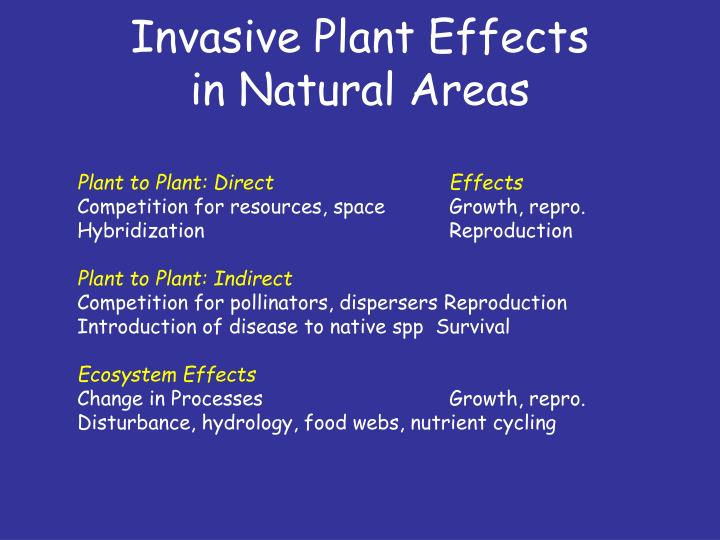 Invasive Plant Effects