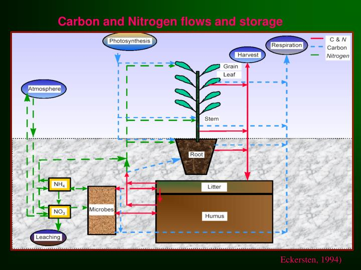 Carbon and Nitrogen flows