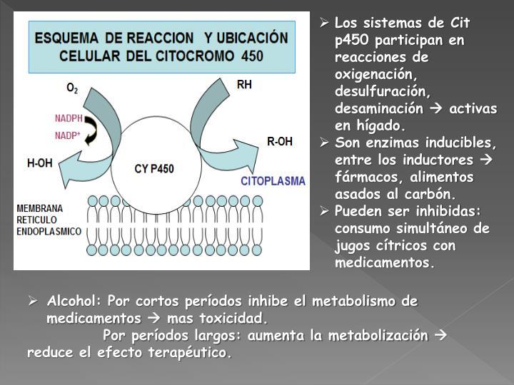 Los sistemas de Cit p450 participan en reacciones de oxigenación, desulfuración, desaminación