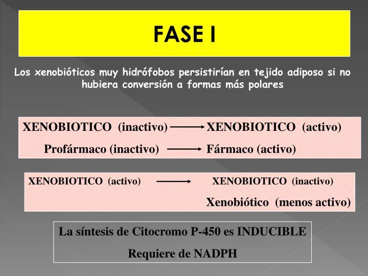 XENOBIOTICO  (inactivo)         XENOBIOTICO  (activo)