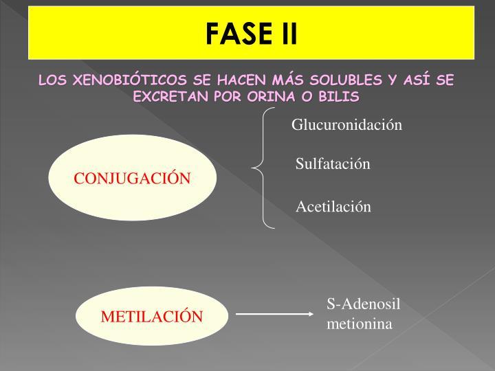 FASE II