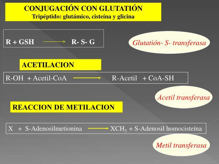 R-OH  + Acetil-CoA                         R-Acetil   + CoA-SH