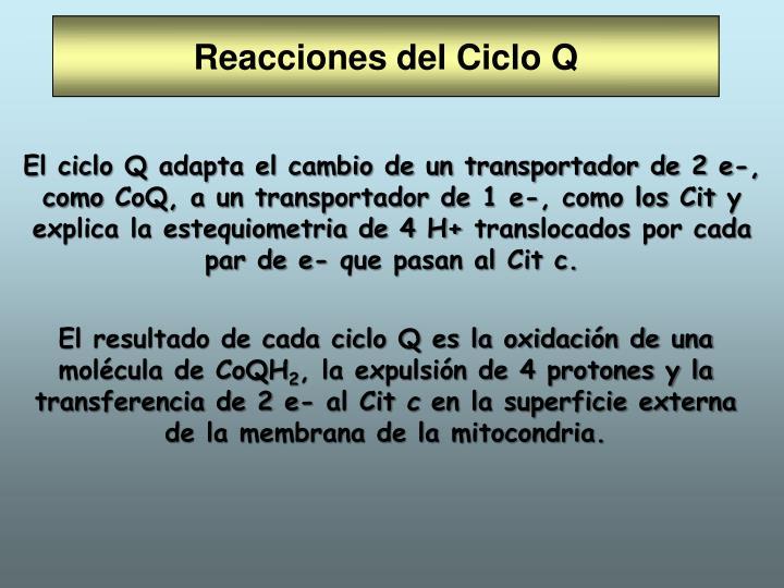 Reacciones del Ciclo Q