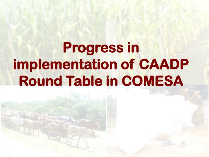Progress in implementation of CAADP Round Table in COMESA