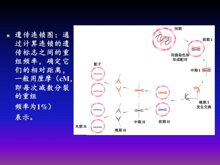 遗传连锁图:通过计算连锁的遗传标志之间的重组频率,确定它们的相对距离,一般用厘摩(