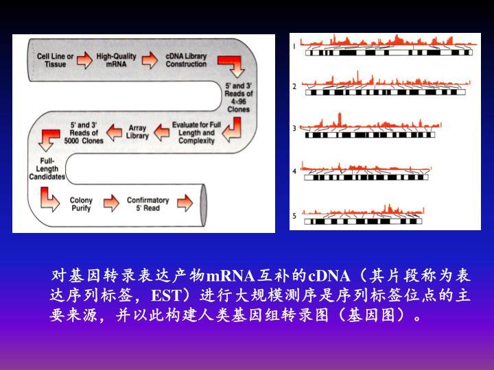 对基因转录表达产物
