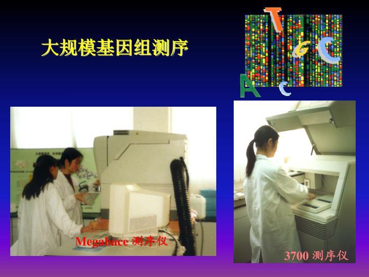 大规模基因组测序