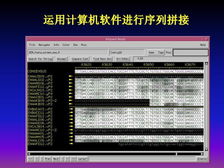 运用计算机软件进行序列拼接