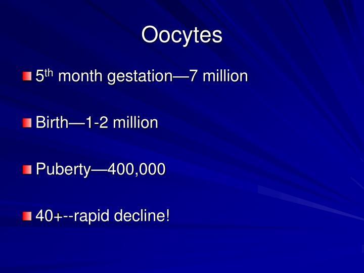 Oocytes
