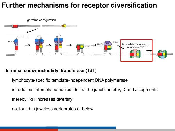 Further mechanisms for receptor diversification