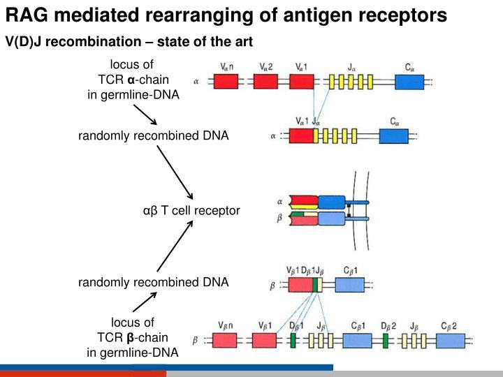 RAG mediated rearranging of antigen receptors