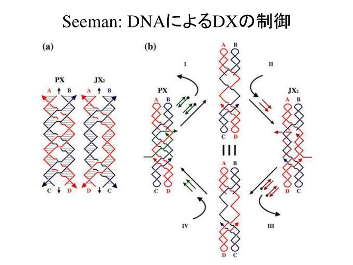 Seeman: DNA
