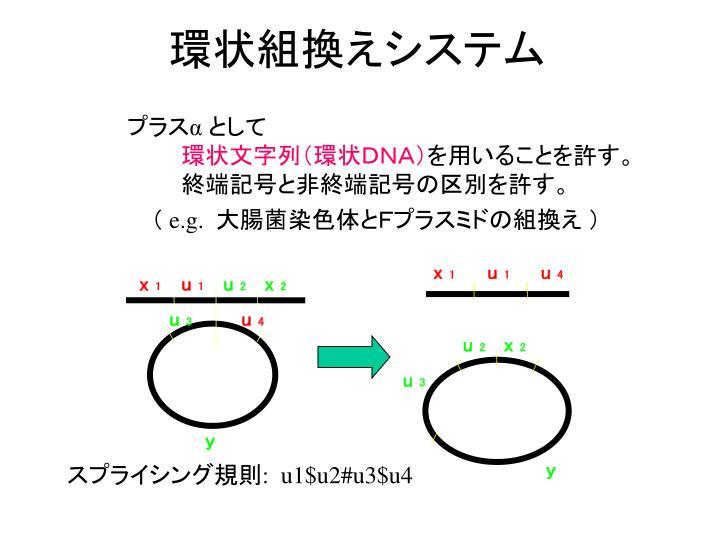 環状組換えシステム
